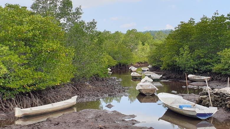 mangrove nusa lembongan