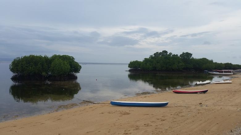 mangrove strand