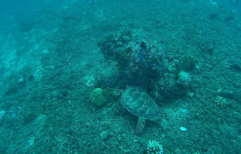 duiken Gili air