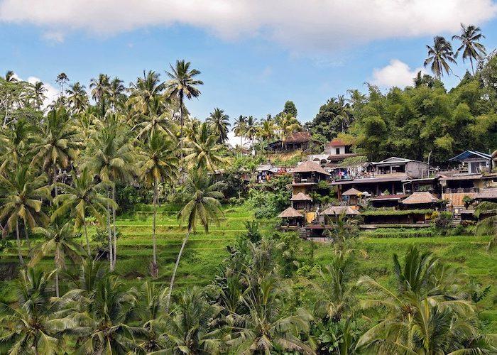 Tegalalang hotel tips rijstvelden