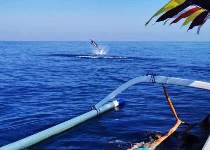 Dolfijnen tour lovina
